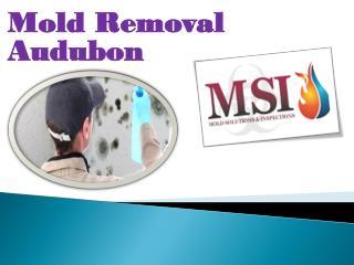 Mold Removal Audubon