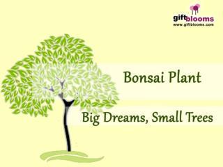Send Bonsai  Plants as a Gift For Long Memory.