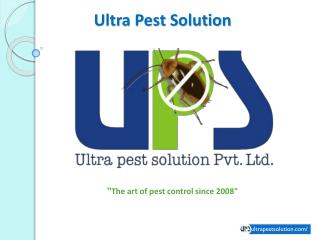 Ultra Pest Solutions - Leading Pest Control and Pest Management Company in Surat