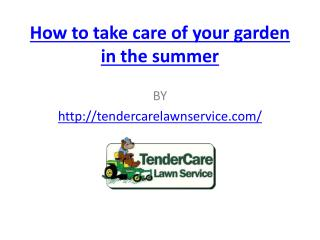 How to take care of your garden in the summer