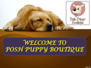 WELCOME TO POSH PUPPY BOUTIQUE