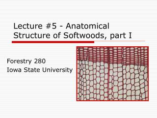 Lecture 5 - Anatomical Structure of Softwoods, part I