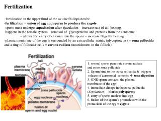 Development  Aging  -fertilization in the upper third of the oviduct