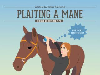 A Step by Step Guide to Plaiting a Mane