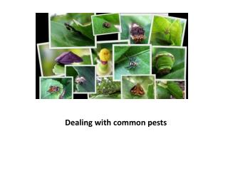 Dealing With Common Pests