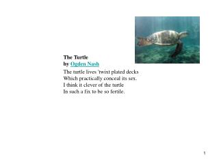 The Turtle  by Ogden Nash    The turtle lives twixt plated decks  Which practically conceal its sex.  I think it clever