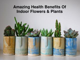 Amazing Health Benefits Of Indoor Flowers & Plants
