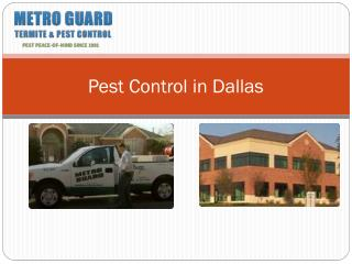 Pest Control in Dallas