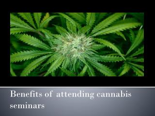 Benefits of attending cannabis seminars