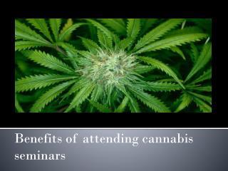 Benefits of attending cannabis seminars
