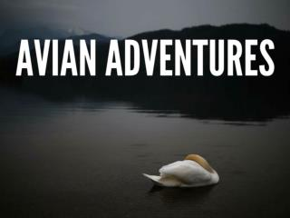 Avian adventures