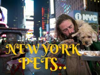 New York pets