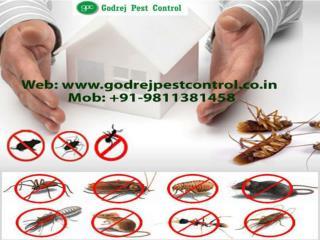 Professional pest control noida call 9811381458