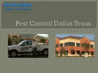 Pest Control Dallas Texas