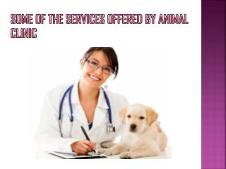 Some of the Services Offered By Animal Clinic