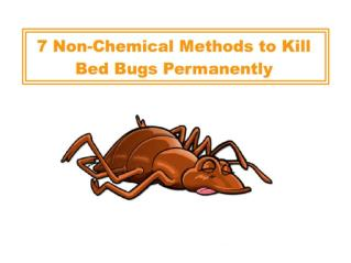 7 Non-Chemical Methods to Kill Bed Bugs Permanently