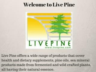 Discover The Power Of Pine