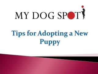 Tips for Adopting a New Puppy
