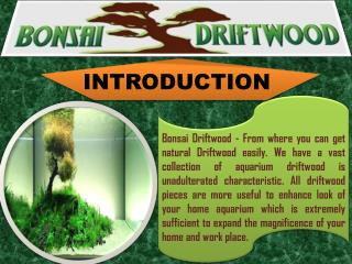BUY DRIFTWOOD FOR AQUARIUM IN USA