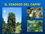 IL VIAGGIO DEL CAFFE