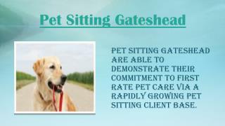 Pet Sitting Gateshead