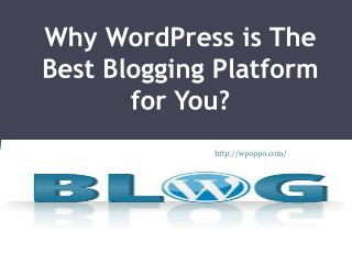 Find Out Here Why WordPress Is Best Blogging Platform?