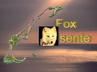 Fox pr sente