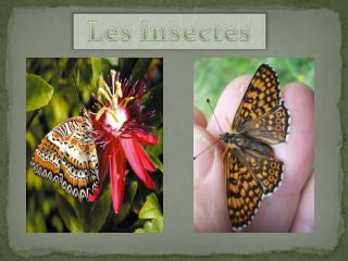 Insectes et autres
