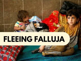 Fleeing Falluja