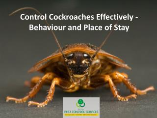 Control Cockroaches Effectively - Behaviour and Place of Stay