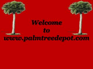 Sabal Palms For Sale