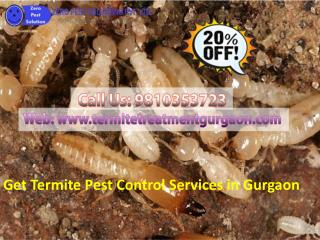 Get termite pest control services in gurgaon call 9810353723