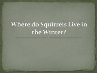 Where do Squirrels Live in the Winter?