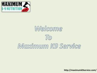 Dog Training Long Island: Maximum K9 Service