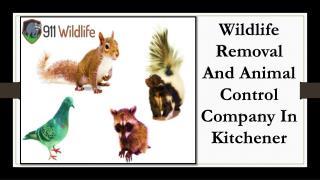 Kitchener Animal Control & Wildlife Removal – 911Wildlife