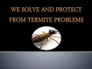 We solve and protect from Termite Problems