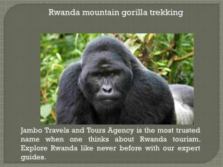 Rwanda wildlife tours and safaris