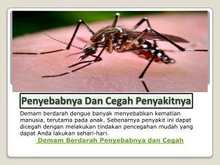 Demam Berdarah: Kenali Penyebabnya Dan Cegah Penyakitnya
