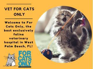 Cat Veterinarian in West Palm Beach