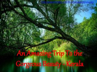 Have an Exotic trip to Kerala