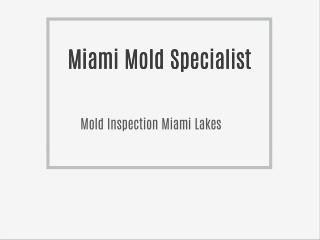 Miami Mold Specialist
