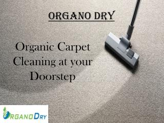 Organic Carpet Cleaning at your Doorstep