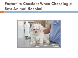 Factors to Consider When Choosing a Best Animal Hospital