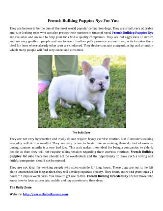 French bulldog puppies nyc for you