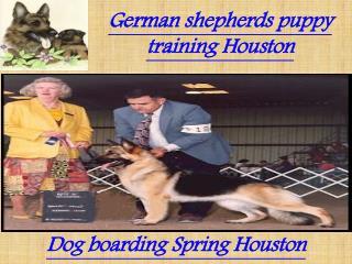 German shepherds puppy training Houston