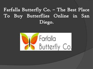 Farfalla Butterfly Co. – The Best Place To Buy Butterflies Online in San Diego