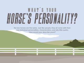 What's Your Horse's Personality?