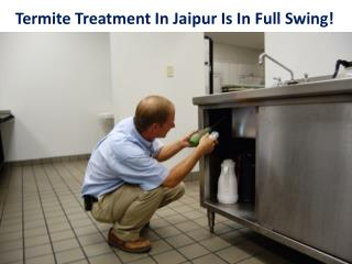 Termite Treatment In Jaipur Is In Full Swing!