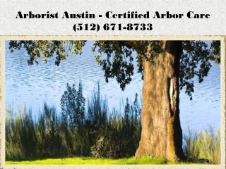 Tree Prunning Austin
