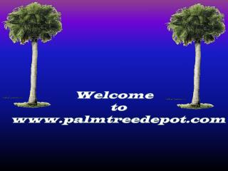 Sabal Palm Trees for Sale in North Carolina